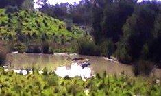 Hippos at Werribee
